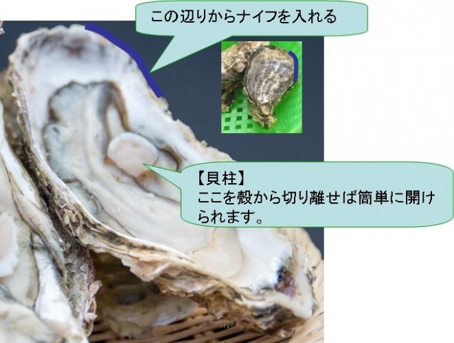 牡蠣説明付